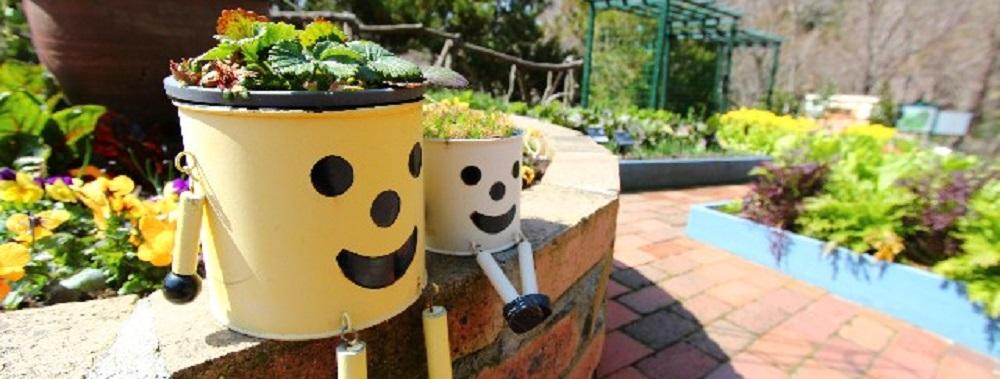 植物の育て方と花言葉|ガーデニング歴20年の主婦が分かりやすく教えます