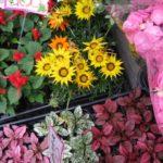 ガーデニングの基本・肥料の種類と与え方