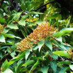ユーカリの育て方と挿し木の方法