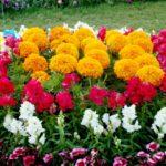 ガーデニング初心者さんでも育てやすい花